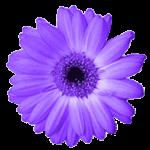 Artweaver 5.1.3